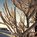 wintertime-060