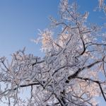 wintertime-063
